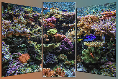 Bed Quilts Mixed Media - Salt Water Reef And Fish Triptych 3 Panel 01 by Thomas Woolworth