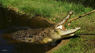 Photograph - Saltwater Crocodile 11 by Gary Crockett