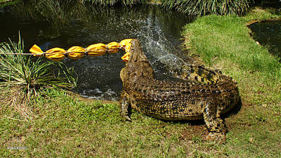 Photograph - Saltwater Crocodile 12 by Gary Crockett