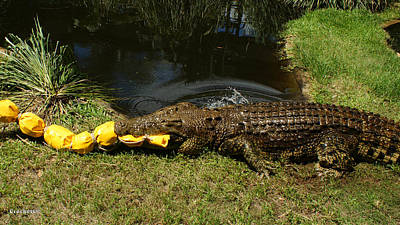 Photograph - Saltwater Crocodile 14 by Gary Crockett