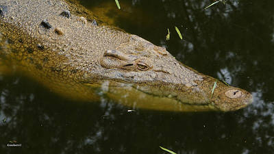 Photograph - Saltwater Crocodile 19 by Gary Crockett
