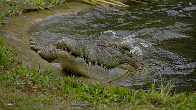 Photograph - Saltwater Crocodile 20 by Gary Crockett