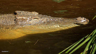 Photograph - Saltwater Crocodile 4 by Gary Crockett