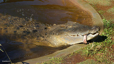 Photograph - Saltwater Crocodile 5 by Gary Crockett