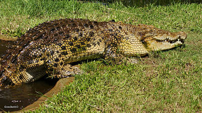 Photograph - Saltwater Crocodile 7 by Gary Crockett