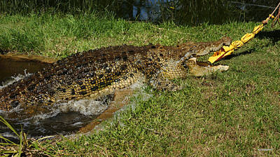 Photograph - Saltwater Crocodile 9 by Gary Crockett