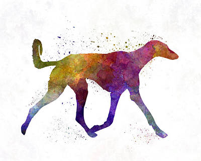 Saluki Painting - Saluki In Watercolor by Pablo Romero