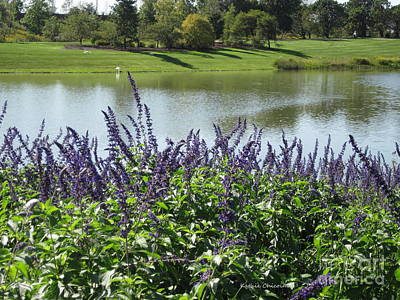 Photograph - Salvia At The Lake by Kathie Chicoine