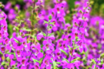Photograph - Salvia Glow by Kay Brewer