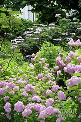 Photograph - Pink Hydrangeas In Mirabell Garden by Carol Groenen