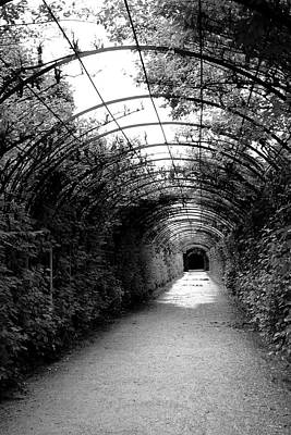 Austria Photograph - Salzburg Vine Tunnel - By Linda Woods by Linda Woods