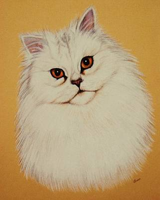 Sam - Persian Cat Art Print by Lucy Deane