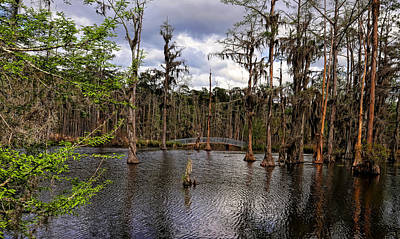 Photograph - Sam Houston Jones State Park 3 by Judy Vincent