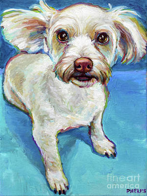 Painting - Sam The Maltese Mix by Robert Phelps