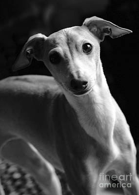 Photograph - Sami In Black And White by Angela Rath