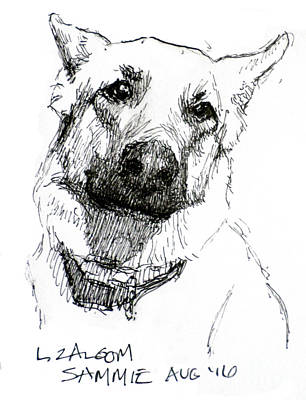 Pen And Ink Drawing Drawing - Sammy by Lorraine Zaloom