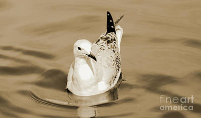 Photograph - Samuel The Seagull 1 by Naomi Burgess