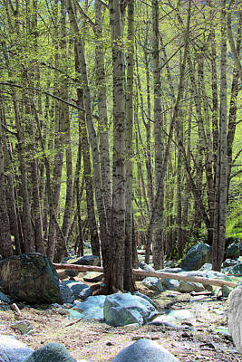 Mount Baldy Photograph - San Antonio Canyon In Spring  by Viktor Savchenko
