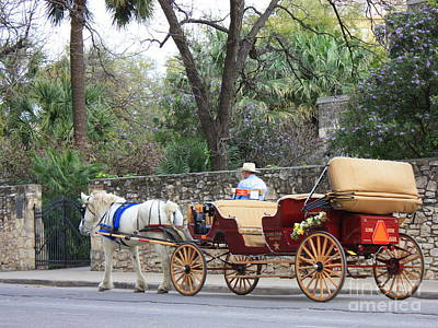 Photograph - San Antonio Carriage by Carol Groenen