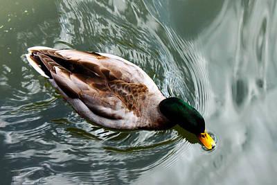 Digital Art - San Antonio Duck by Susan Vineyard