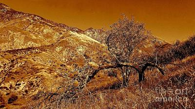 Photograph - San Bernardino California Mountain by Michael Hoard