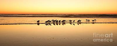 Photograph - San Diego Shorebirds by John F Tsumas