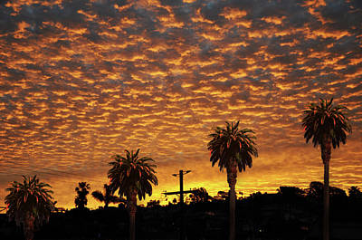 Photograph - San Diego Sunrise With Palm Trees by Larry Butterworth