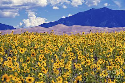 San Dunes Sunflowers Art Print