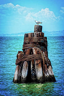 Photograph - San Francisco Bay Lookout by Mike Braun