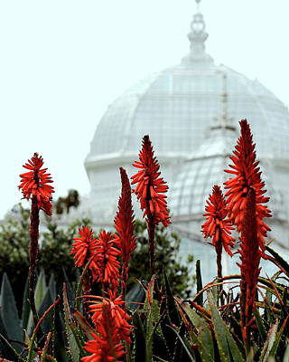Conservatory Of Flowers Photograph - San Francisco Conservatory Of Flowers In Golden Gate Park . 7d5799 by Wingsdomain Art and Photography