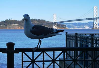 Photograph - San Francisco - Oakland Bay Bridge - Seagull View by Matt Harang