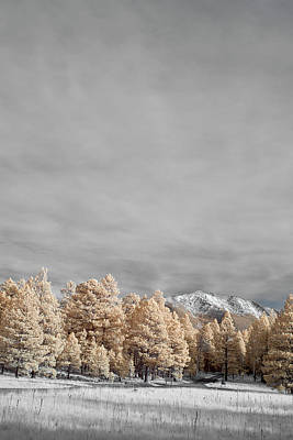Flagstaff Wall Art - Photograph - San Francisco Peak by Jon Glaser