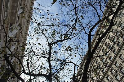 Photograph - San Francisco Trees And Buildings - Looking Up by Matt Harang