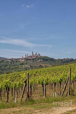 Photograph - San Gigmignano And Its Vineyards  by Patricia Hofmeester