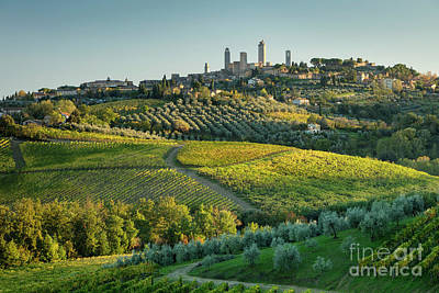 Grapevine Photograph - San Gimignano Evening II by Brian Jannsen