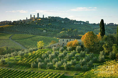 Grapevine Photograph - San Gimignano Morning by Brian Jannsen