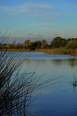 Photograph - San Joaquin Wildlife Sanctuary by Richard Stephen