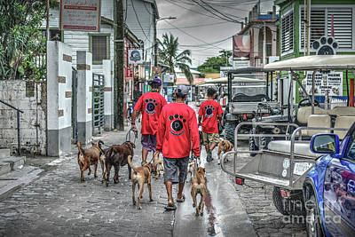 Photograph - San Pedro Belize Dog Walkers by David Zanzinger