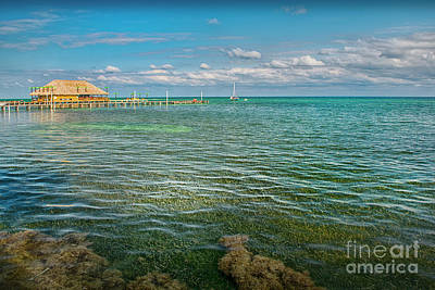 Photograph - San Pedro Clear Water And Sea Grass. by David Zanzinger