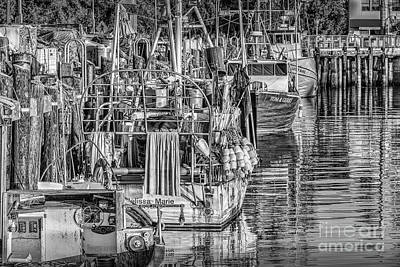 Photograph - San Pedro Fishing Fleet by David Zanzinger