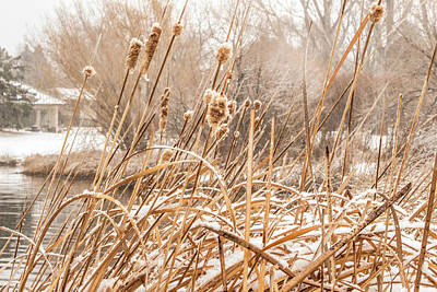 Photograph - Sanborn Park by Tyson Kinnison