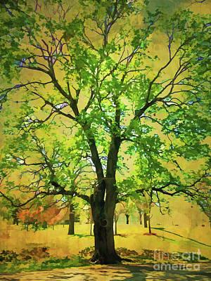 Photograph - Sanctuary Tree by Kerri Farley