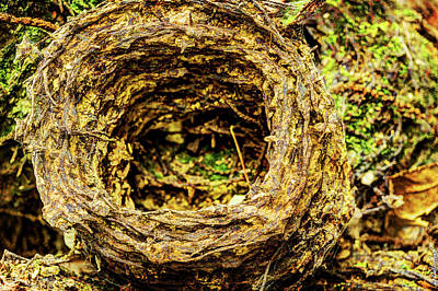 Photograph - Sanctuary Wood Barb Wire Coil - Ypres by Weston Westmoreland