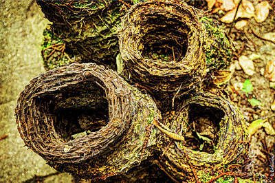 Photograph - Sanctuary Wood Barb Wire Coils - Ypres by Weston Westmoreland