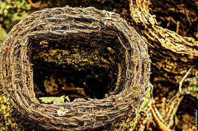 Photograph - Sanctuary Wood Barb Wire - Ypres by Weston Westmoreland