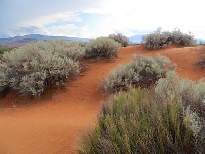 Sand And Sagebrush Art Print