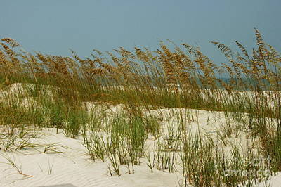 Photograph - Sand And Sea Oats by Myrna Bradshaw