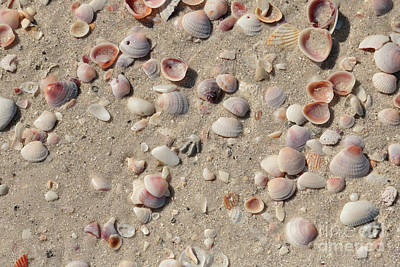 Beach Theme Decorating Photograph - Sand And Shells by Carol Groenen