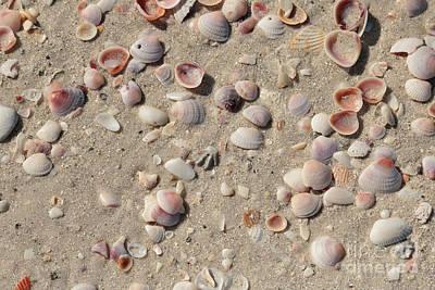 Sand And Shells Art Print