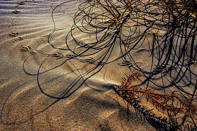 Photograph - Sand Artistry by John Harding